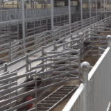 Mortlake Saleyards Day 1
